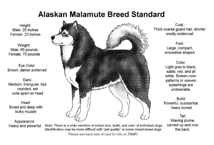 breed standard card
