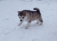 My Girl in snow