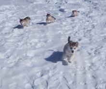 Puppy, Puppy, Puppies