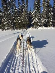 finn and yuki and teddi