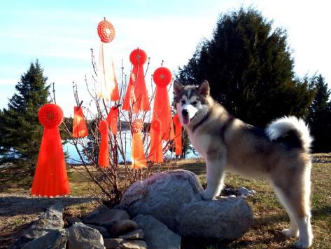finn puppy (2)
