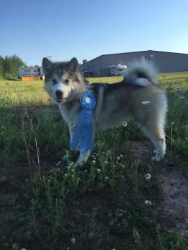 finn puppy (3)