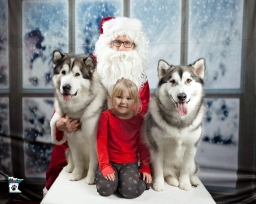 yuki charlie and freya xmas us best